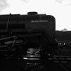 92203 Black Prince Weybourne